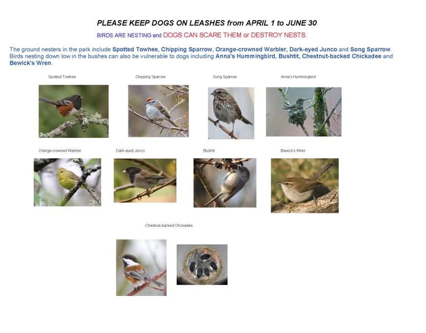 Birds in Uplands Park - Spring 2016