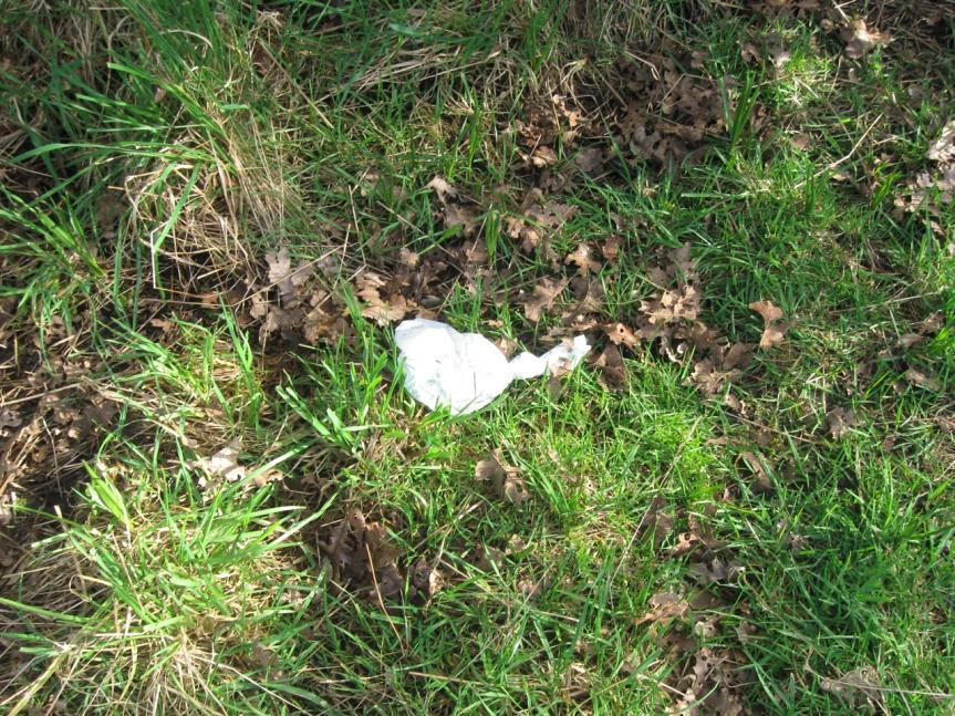 Dog Poop Bag 2015_03_14 IMG_7404