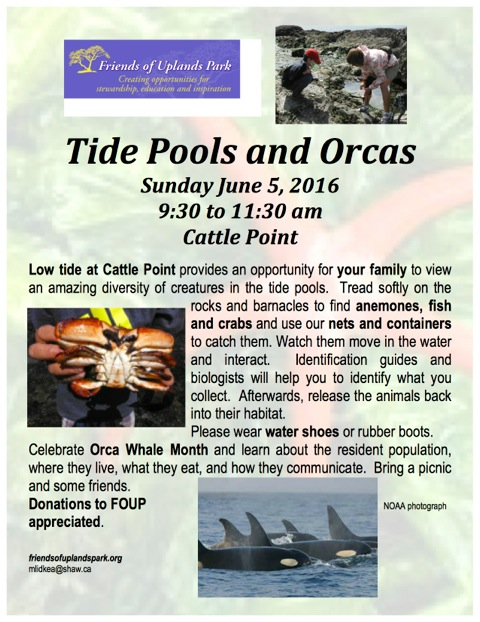 FOUP 2016 Tide Pools and Orcas poster