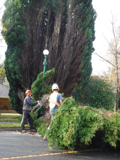 treeappreciation-day-nov2016-dscf5665