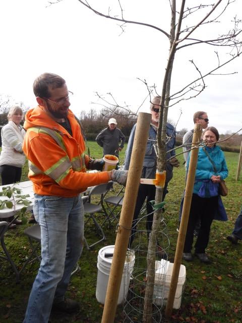 treeappreciation-day-nov2016-dscf5677