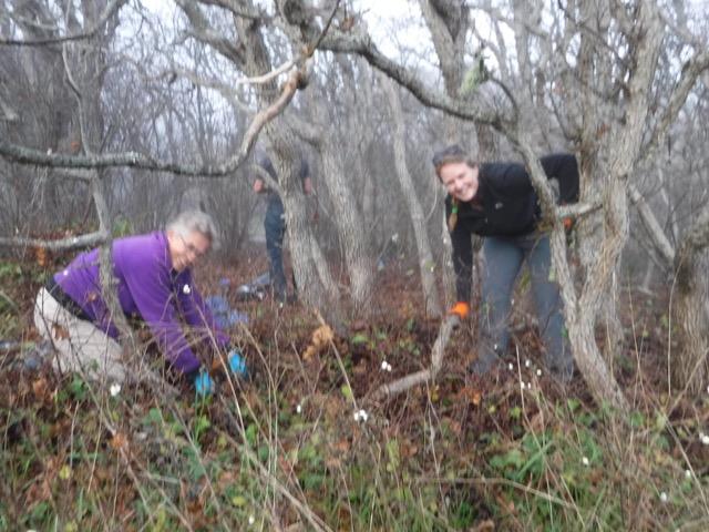 treeappreciation-day-nov2016-dscf5724