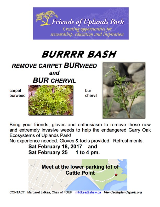 2017-feb1825burrrr-bash