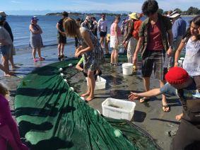 BeachSeine June 25-2017 Wiley3