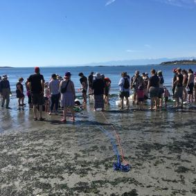 BeachSeine June 25-2017 Wiley7